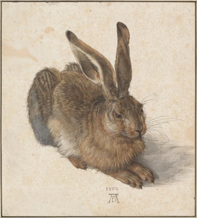 Albrecht Dürer_Young Hare (1502)